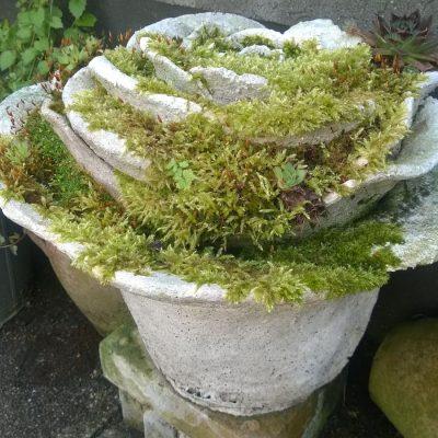 een leuke pot voor in de tuin.